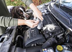 HUK-CO-PR-Marder-Auto-Hausmittel-Hundehaar_HAL4877-Druck