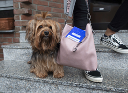 Hund_Impfausweis